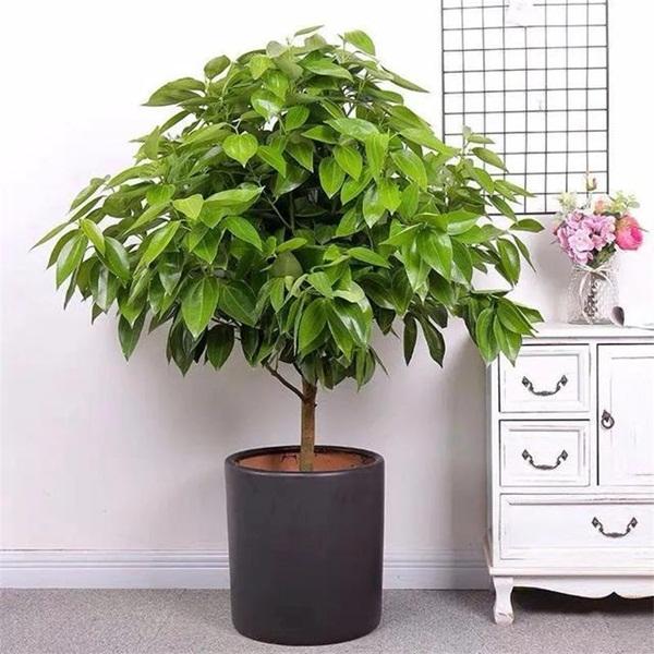 Trồng 4 loại cây này trong nhà, gia đình có ngay máy tạo độ ẩm tự nhiên, thanh lọc không khí tiết kiệm được khối tiền điện mỗi năm-2