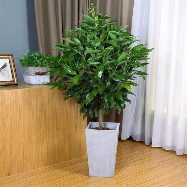 Trồng 4 loại cây này trong nhà, gia đình có ngay máy tạo độ ẩm tự nhiên, thanh lọc không khí tiết kiệm được khối tiền điện mỗi năm-3