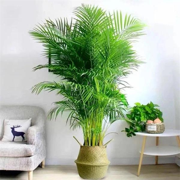 Trồng 4 loại cây này trong nhà, gia đình có ngay máy tạo độ ẩm tự nhiên, thanh lọc không khí tiết kiệm được khối tiền điện mỗi năm-4