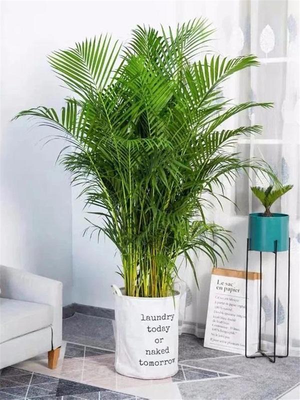 Trồng 4 loại cây này trong nhà, gia đình có ngay máy tạo độ ẩm tự nhiên, thanh lọc không khí tiết kiệm được khối tiền điện mỗi năm-6