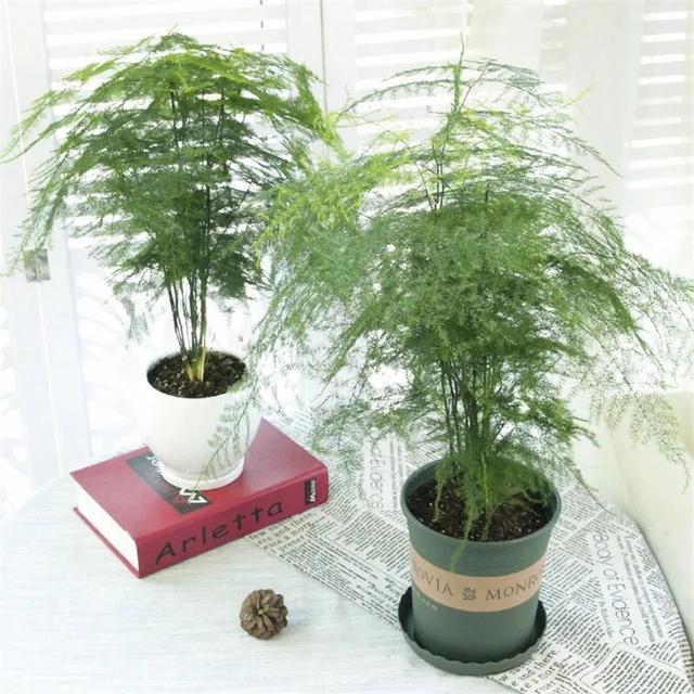 Trồng 4 loại cây này trong nhà, gia đình có ngay máy tạo độ ẩm tự nhiên, thanh lọc không khí tiết kiệm được khối tiền điện mỗi năm-10