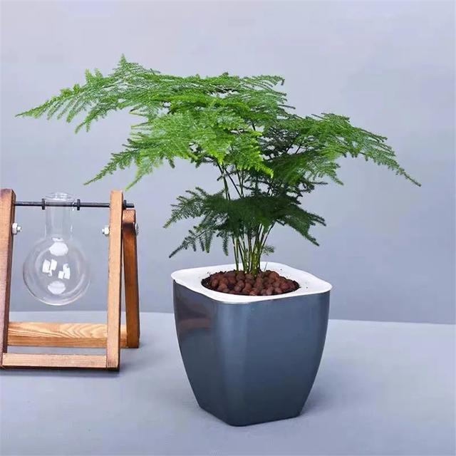 Trồng 4 loại cây này trong nhà, gia đình có ngay máy tạo độ ẩm tự nhiên, thanh lọc không khí tiết kiệm được khối tiền điện mỗi năm-9