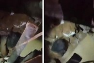 Điều kỳ diệu sau thảm họa: Bé gái 2 tuổi thoát chết thần kỳ sau 24 tiếng bị vùi trong đống đổ nát ở Beirut