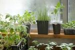 Mẹo trồng rau sạch trên ban công cực đơn giản, lại không gây mùi khó chịu