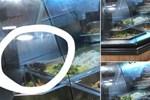 Kinh hãi hình ảnh 2 chú chuột vô tư 'đánh chén' trong quầy thức ăn bán sẵn tại trung tâm thương mại nổi tiếng ở Sài Gòn