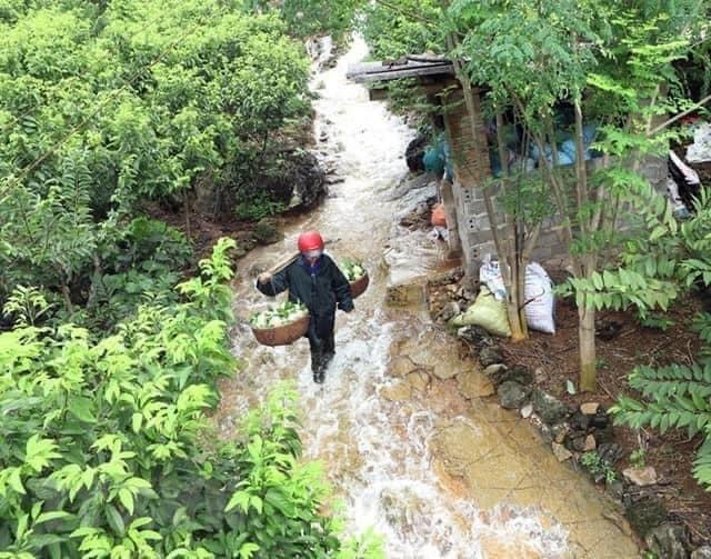 Đặc sản núi đá Xứ Lạng về Hà Nội, giá đắt gấp đôi vẫn đắt hàng-5