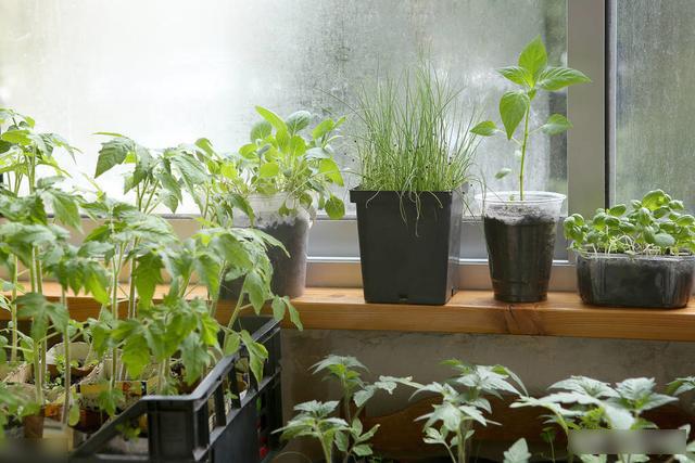 Mẹo trồng rau sạch trên ban công cực đơn giản, lại không gây mùi khó chịu-1