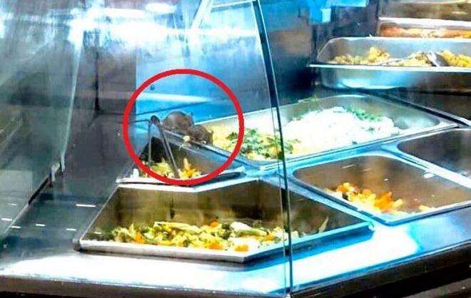 Aeon Mall phản hồi về vụ chuột bò trên khay thức ăn khu ẩm thực-1