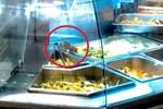 Aeon Mall phản hồi về vụ chuột bò trên khay thức ăn khu ẩm thực