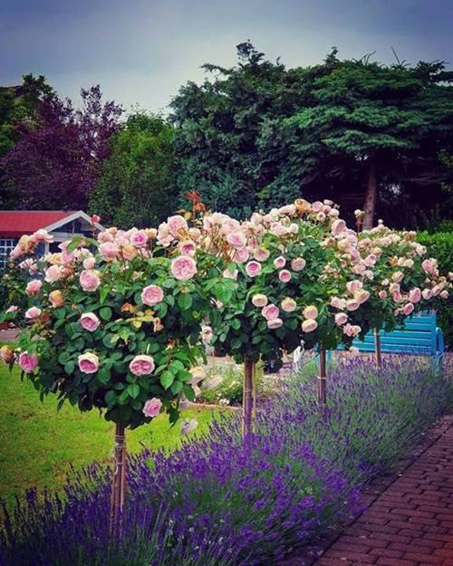 Mẹ Việt biến vườn cỏ dại thành thiên đường bên Tây, hàng xóm phấn khích sang tận nhà khen-2