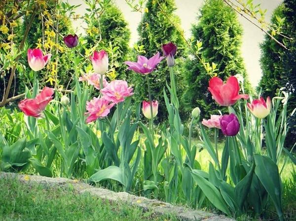 Mẹ Việt biến vườn cỏ dại thành thiên đường bên Tây, hàng xóm phấn khích sang tận nhà khen-9
