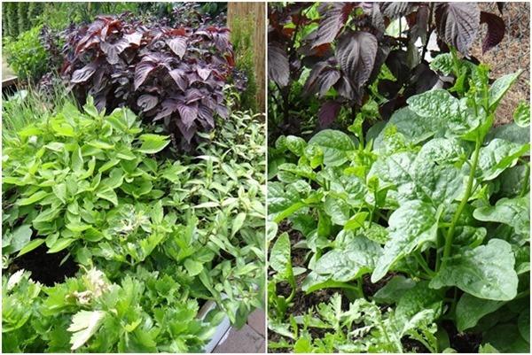 Mẹ Việt biến vườn cỏ dại thành thiên đường bên Tây, hàng xóm phấn khích sang tận nhà khen-17