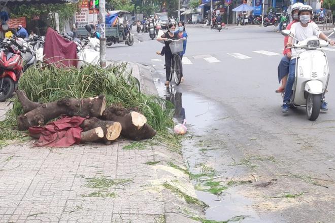 Cây phượng đè trúng người đi đường trong mưa lớn ở TP.HCM-1