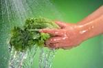 Rửa rau ai cũng nghĩ dễ ợt thế nhưng có những điều hầu hết chúng ta còn 'lơ mơ' lắm!