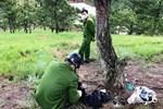 Đà Lạt: Phát hiện thi thể cô gái và thư tuyệt mệnh cạnh cây thông cô đơn