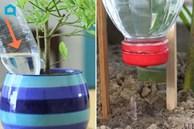 Vắng nhà cả tuần, chỉ cần 1 chai nhựa và thêm vài thao tác đơn giản, cây cối bỏ không vẫn tươi