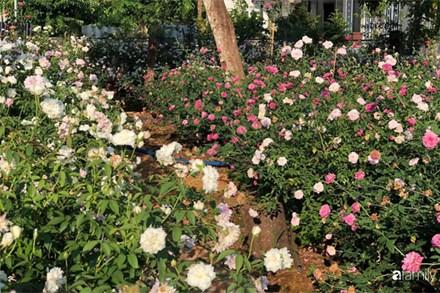 Khu vườn hoa hồng đẹp như cổ tích mà người chồng ngày đêm chăm sóc để tặng vợ con ở Vũng Tàu