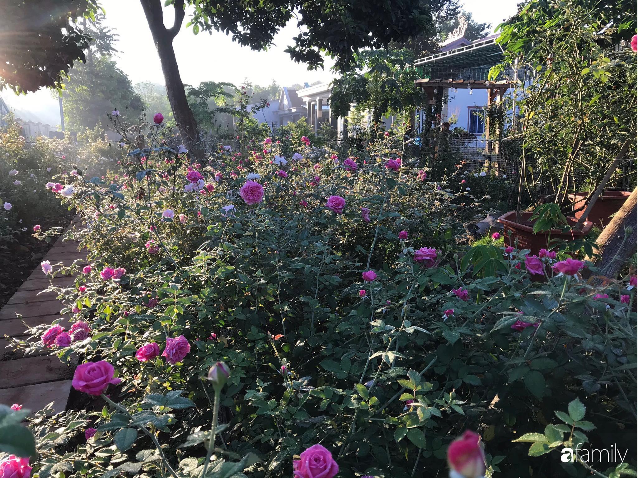 Khu vườn hoa hồng đẹp như cổ tích mà người chồng ngày đêm chăm sóc để tặng vợ con ở Vũng Tàu-20