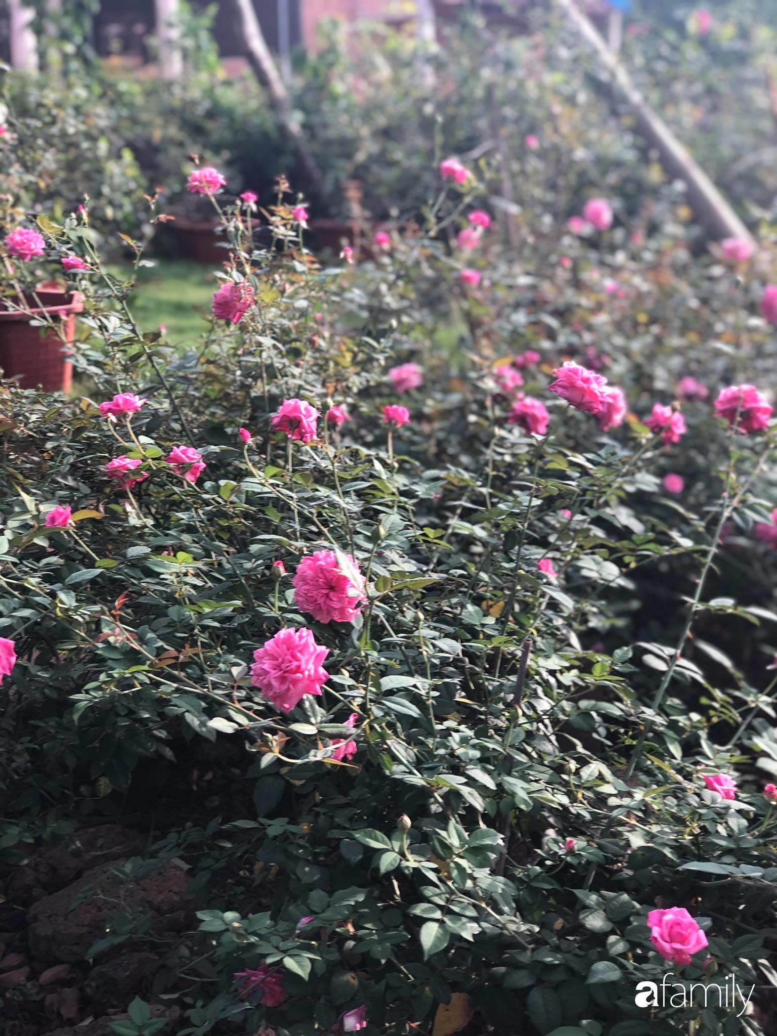 Khu vườn hoa hồng đẹp như cổ tích mà người chồng ngày đêm chăm sóc để tặng vợ con ở Vũng Tàu-30