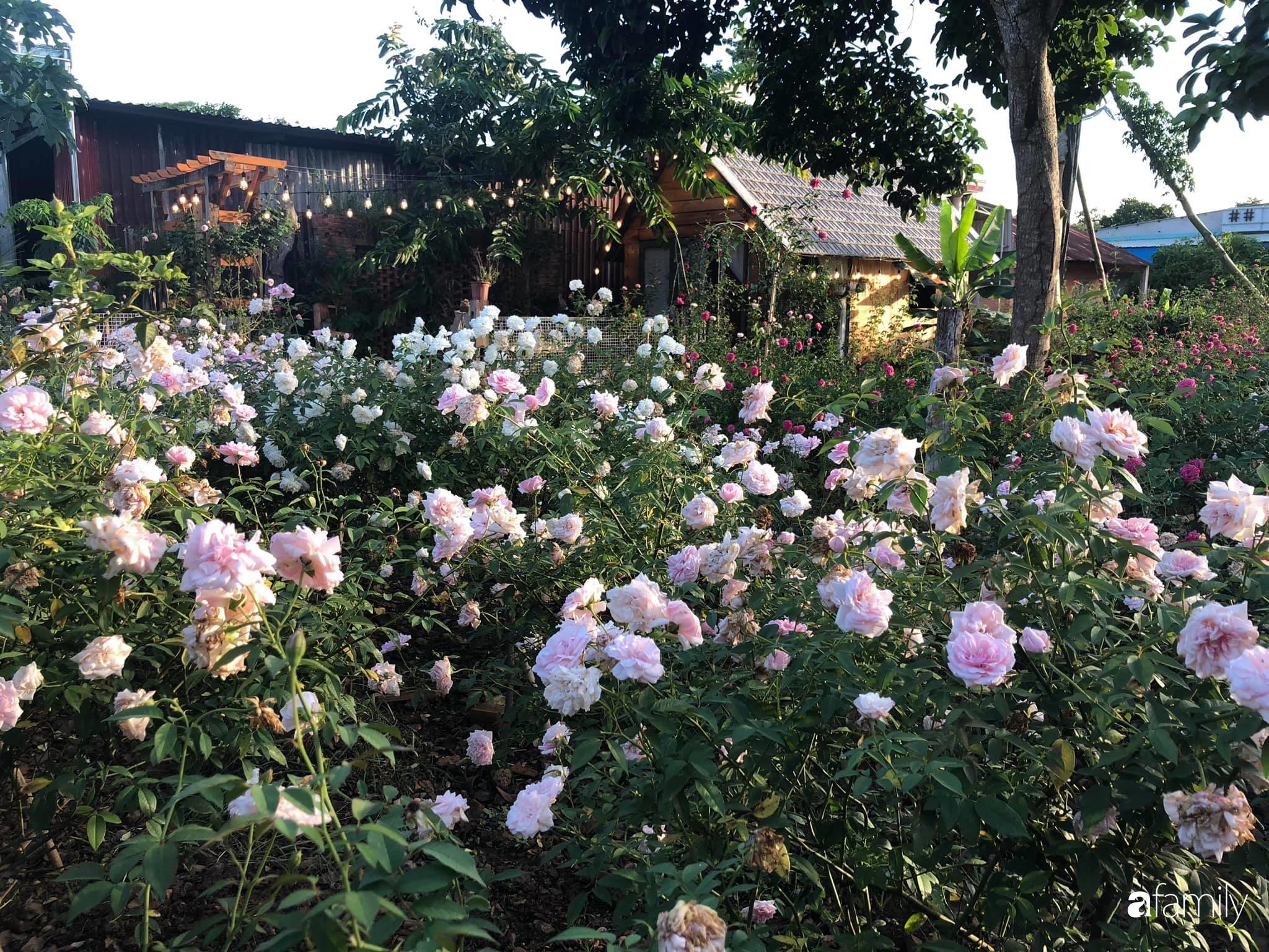 Khu vườn hoa hồng đẹp như cổ tích mà người chồng ngày đêm chăm sóc để tặng vợ con ở Vũng Tàu-24