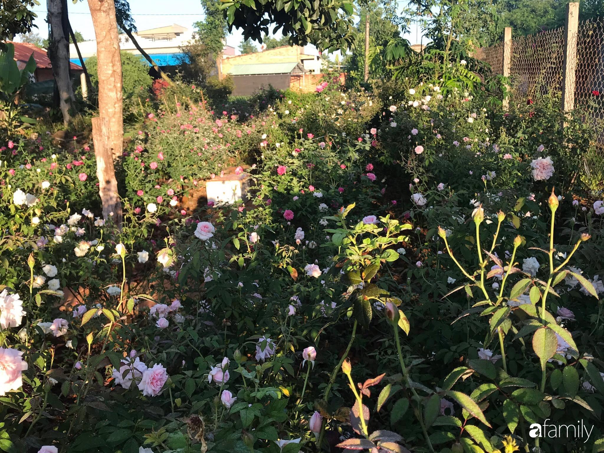 Khu vườn hoa hồng đẹp như cổ tích mà người chồng ngày đêm chăm sóc để tặng vợ con ở Vũng Tàu-16