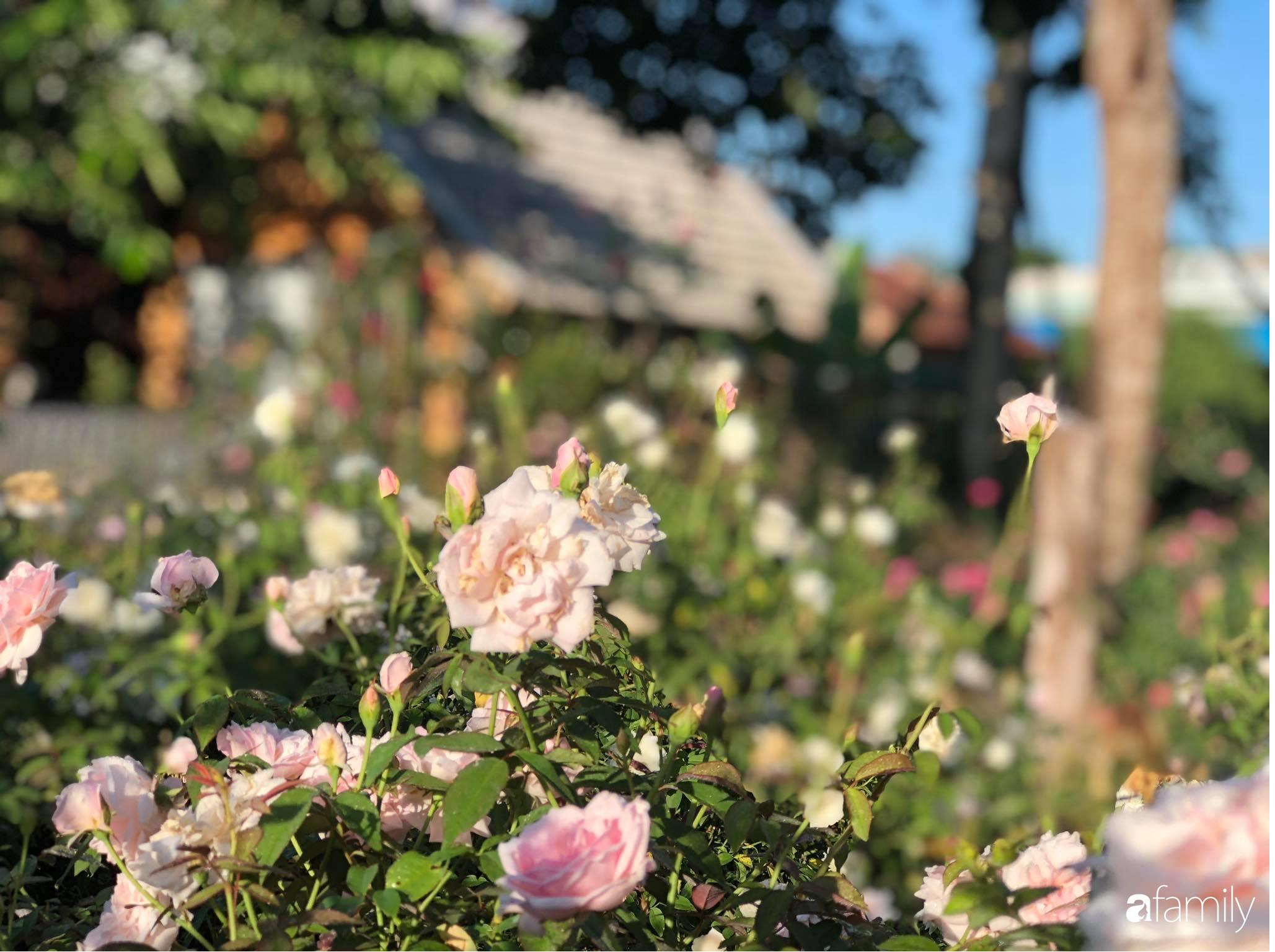 Khu vườn hoa hồng đẹp như cổ tích mà người chồng ngày đêm chăm sóc để tặng vợ con ở Vũng Tàu-28