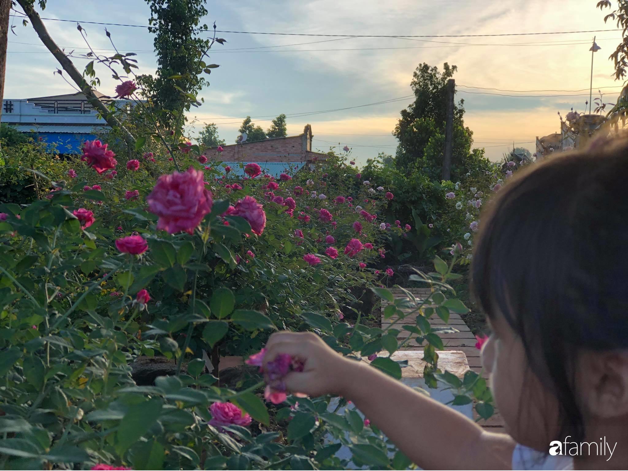 Khu vườn hoa hồng đẹp như cổ tích mà người chồng ngày đêm chăm sóc để tặng vợ con ở Vũng Tàu-29