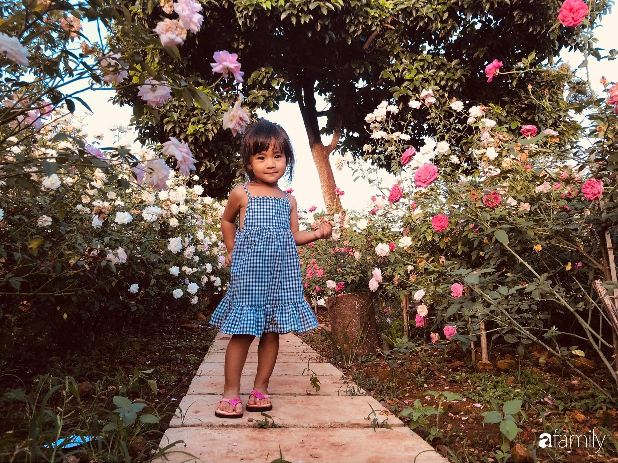 Khu vườn hoa hồng đẹp như cổ tích mà người chồng ngày đêm chăm sóc để tặng vợ con ở Vũng Tàu-14