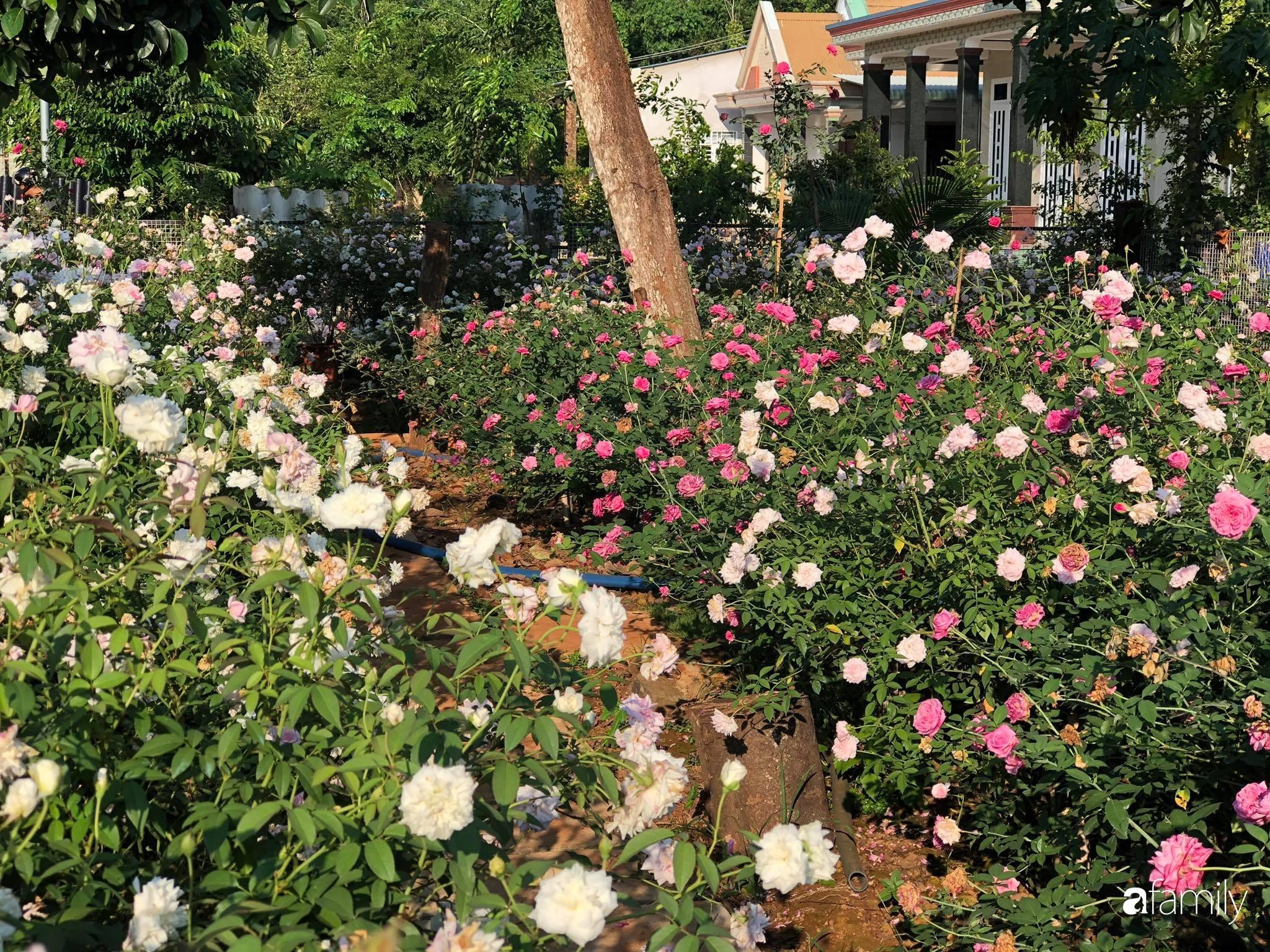 Khu vườn hoa hồng đẹp như cổ tích mà người chồng ngày đêm chăm sóc để tặng vợ con ở Vũng Tàu-26