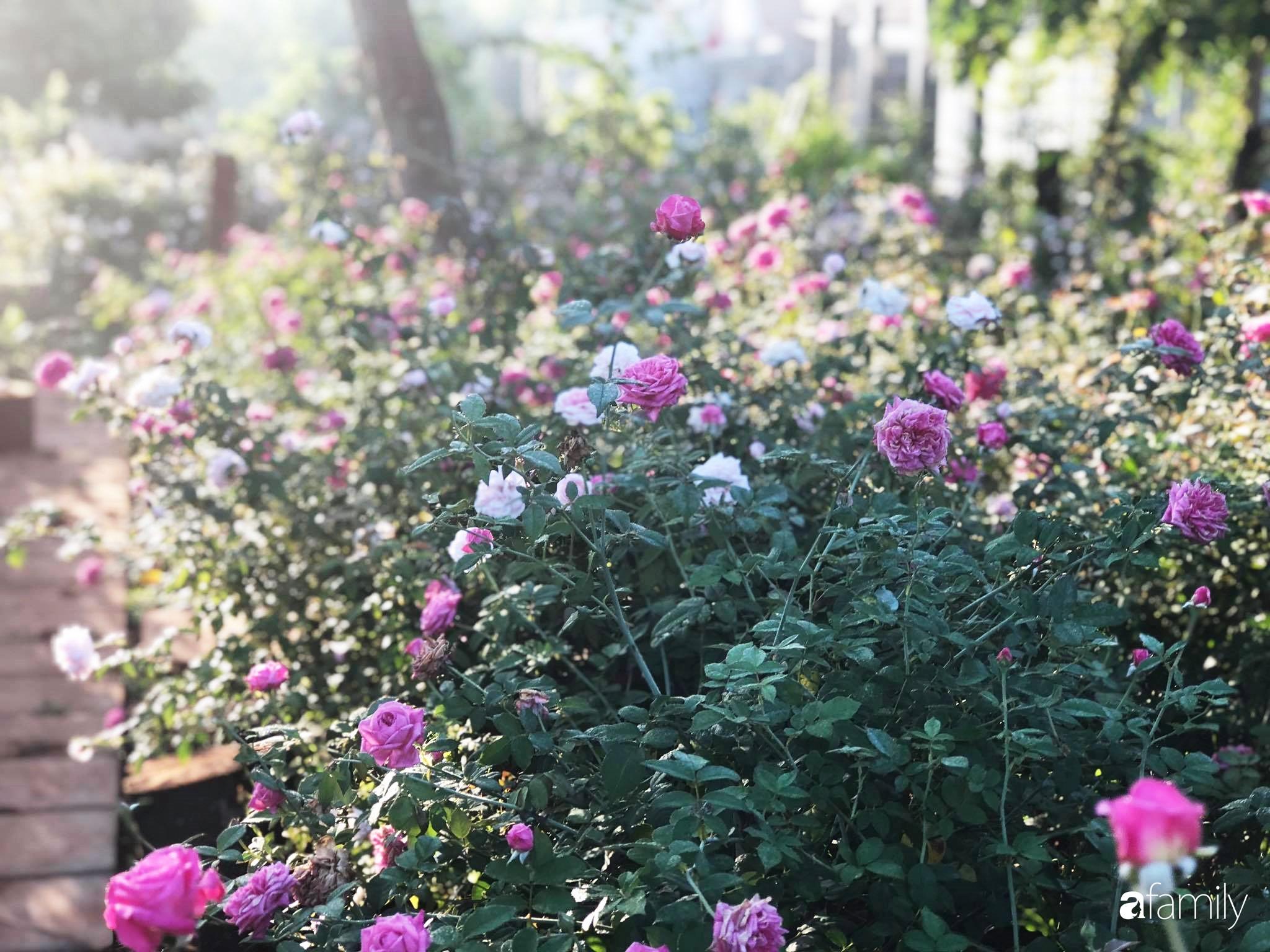 Khu vườn hoa hồng đẹp như cổ tích mà người chồng ngày đêm chăm sóc để tặng vợ con ở Vũng Tàu-22