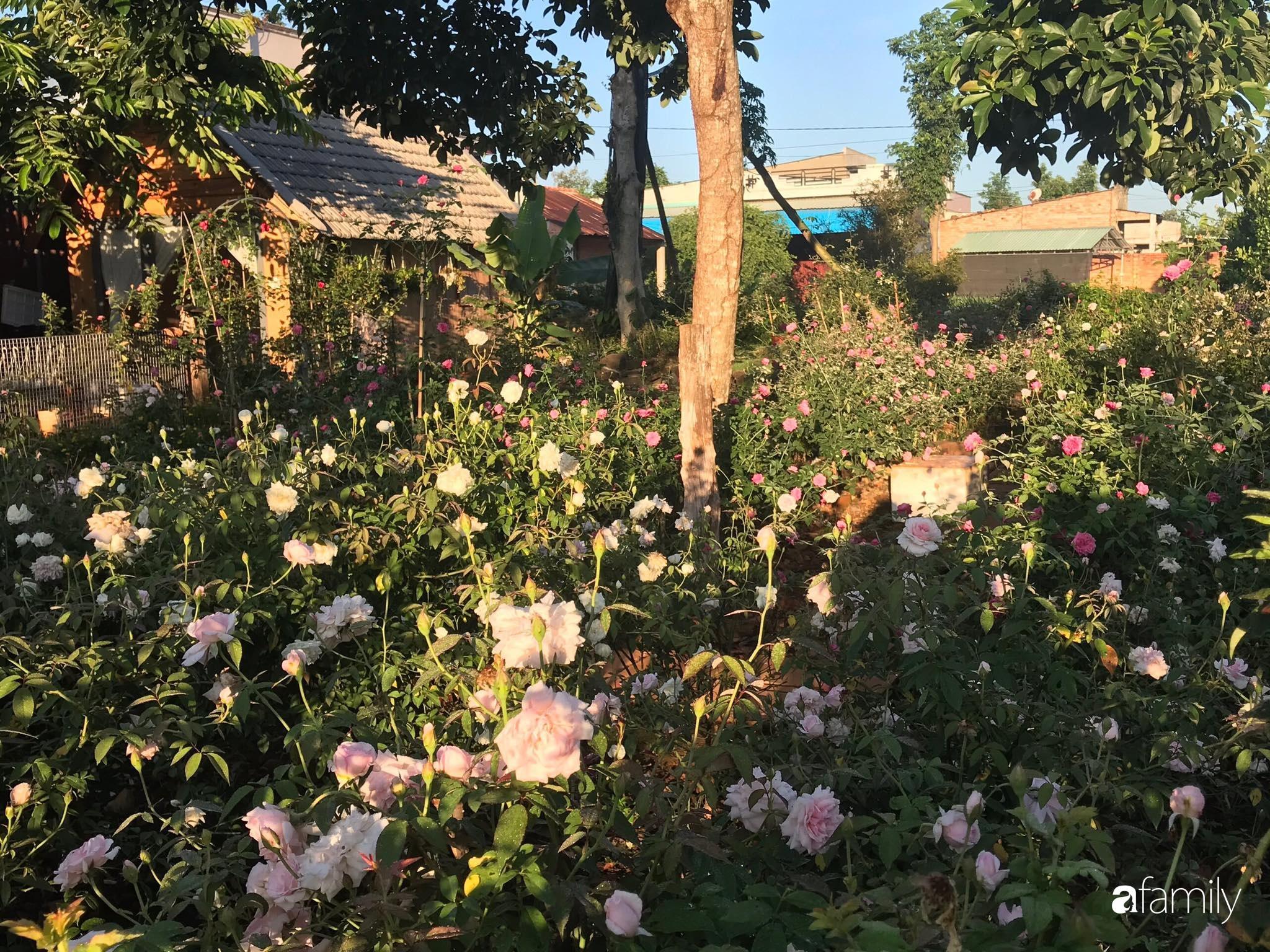 Khu vườn hoa hồng đẹp như cổ tích mà người chồng ngày đêm chăm sóc để tặng vợ con ở Vũng Tàu-11