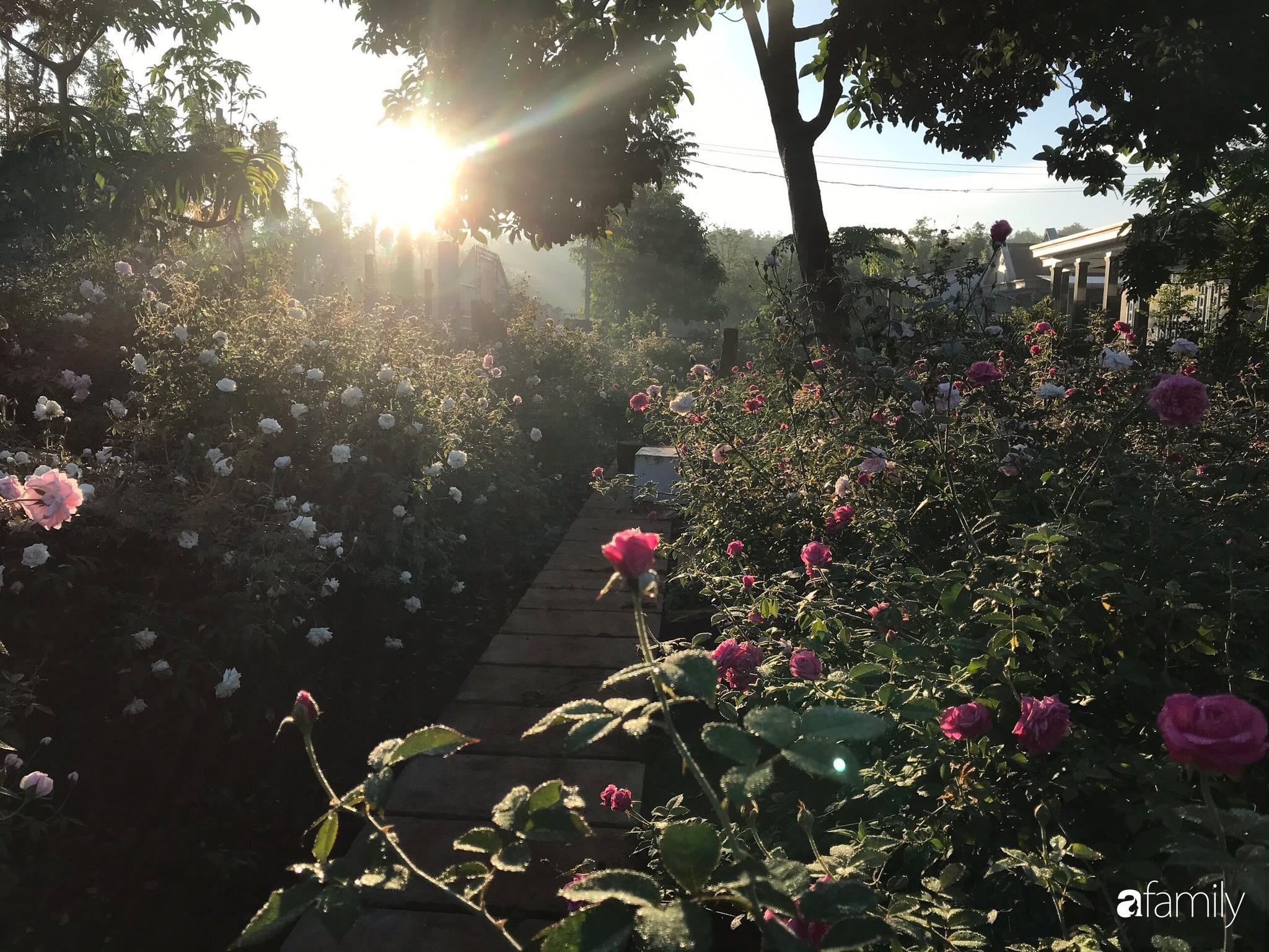 Khu vườn hoa hồng đẹp như cổ tích mà người chồng ngày đêm chăm sóc để tặng vợ con ở Vũng Tàu-21