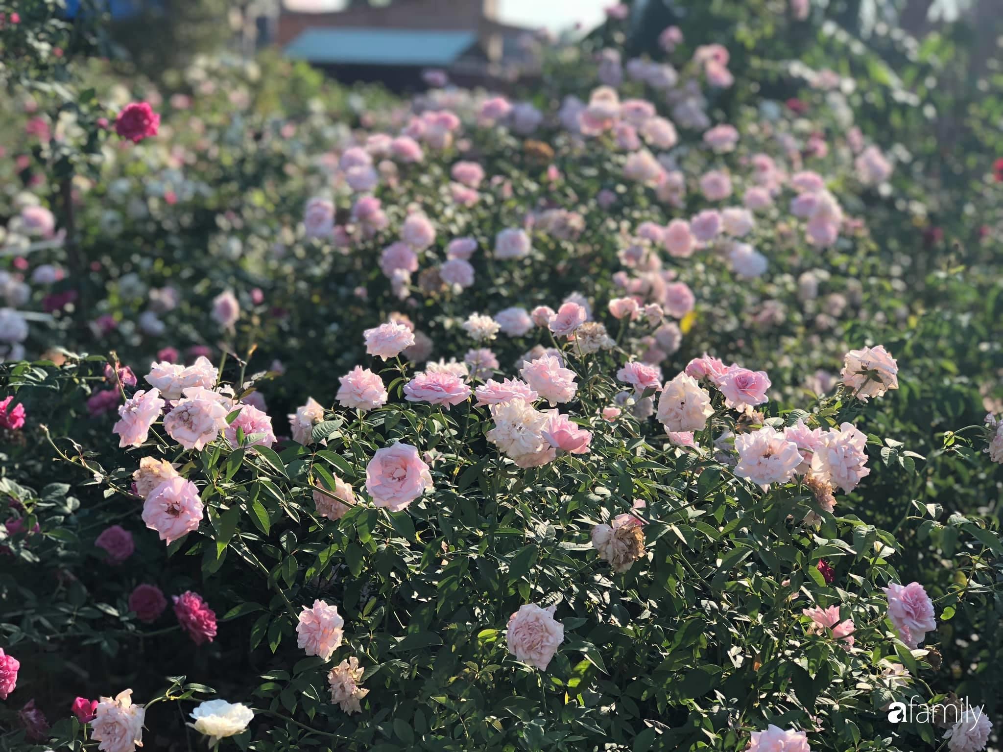 Khu vườn hoa hồng đẹp như cổ tích mà người chồng ngày đêm chăm sóc để tặng vợ con ở Vũng Tàu-23