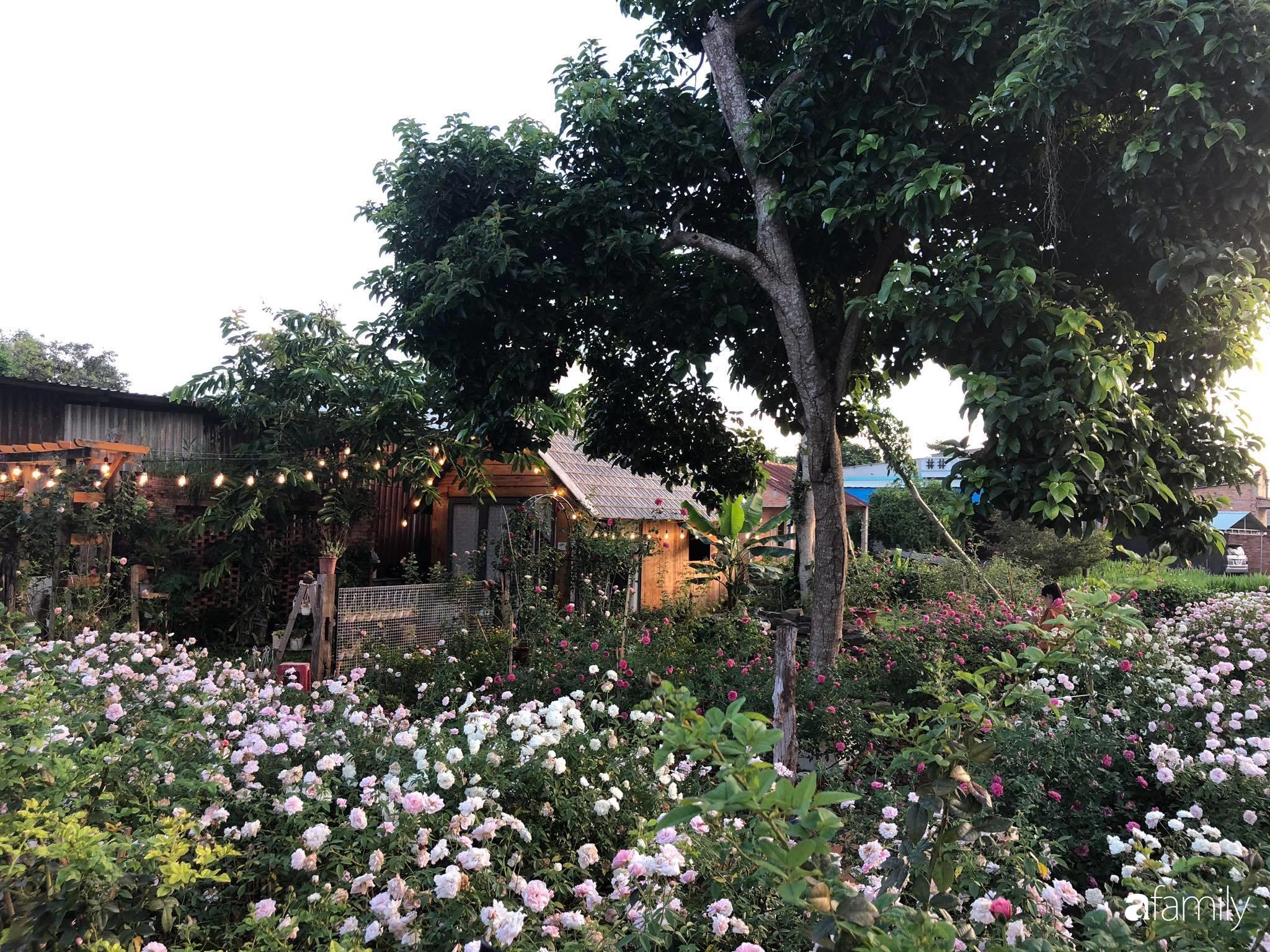 Khu vườn hoa hồng đẹp như cổ tích mà người chồng ngày đêm chăm sóc để tặng vợ con ở Vũng Tàu-9