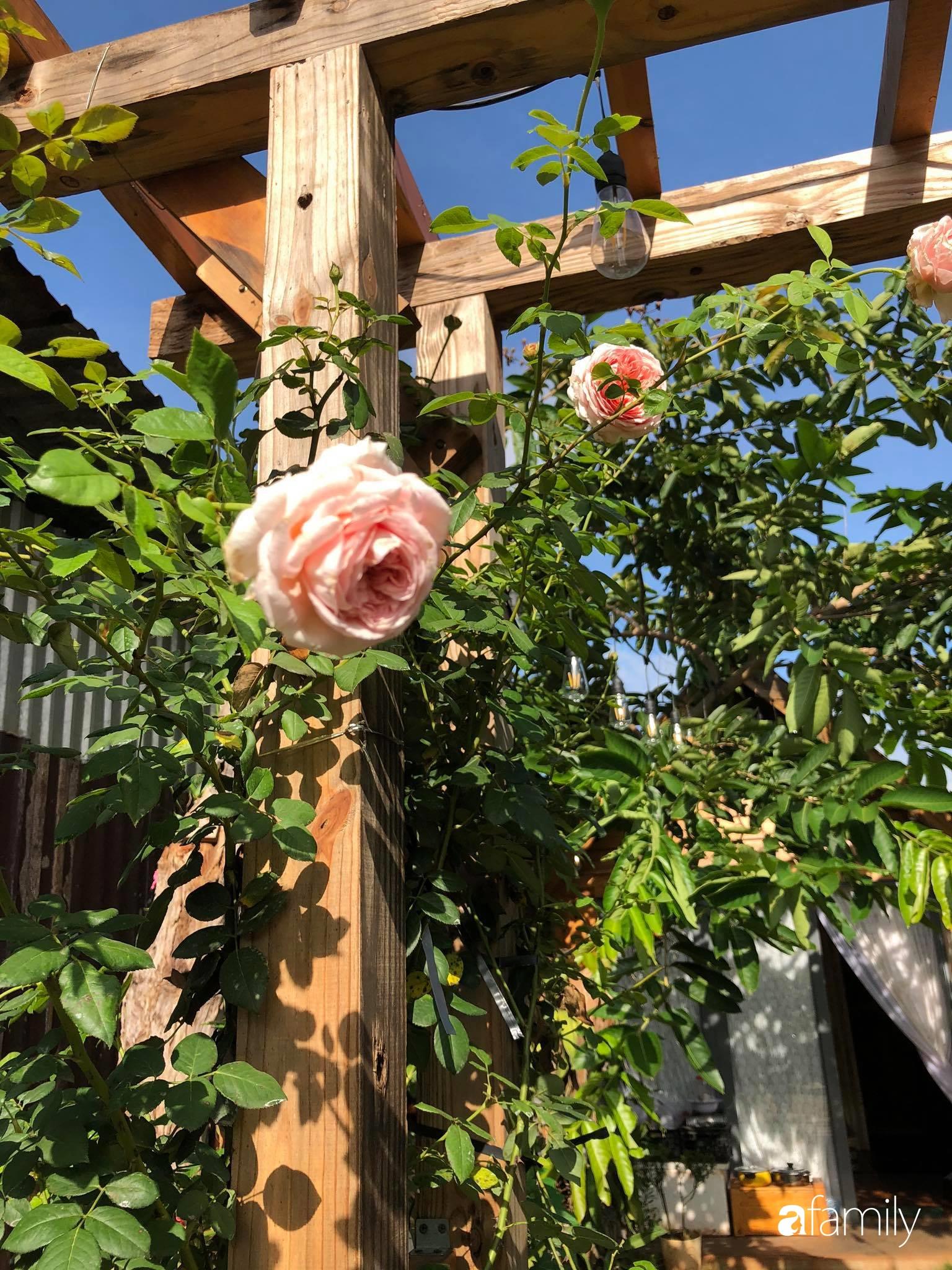 Khu vườn hoa hồng đẹp như cổ tích mà người chồng ngày đêm chăm sóc để tặng vợ con ở Vũng Tàu-34