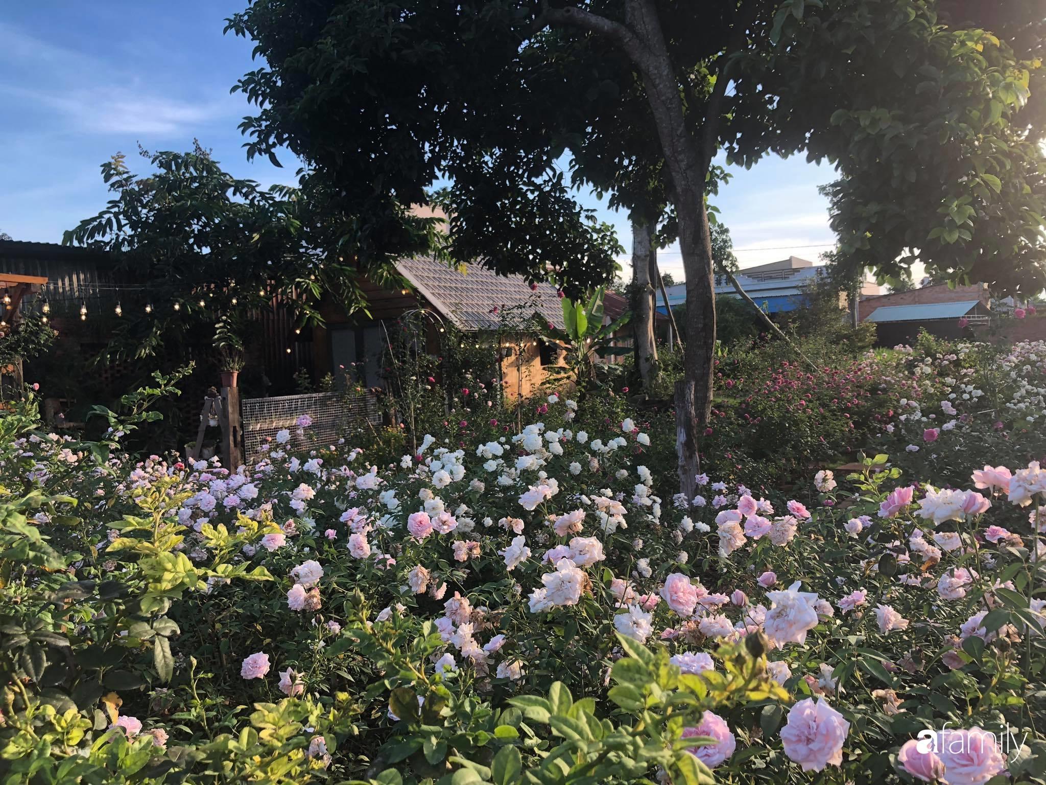 Khu vườn hoa hồng đẹp như cổ tích mà người chồng ngày đêm chăm sóc để tặng vợ con ở Vũng Tàu-2