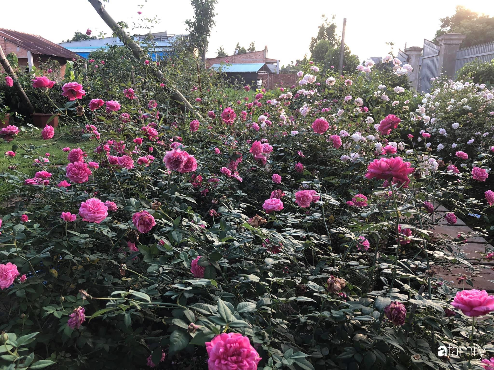 Khu vườn hoa hồng đẹp như cổ tích mà người chồng ngày đêm chăm sóc để tặng vợ con ở Vũng Tàu-8