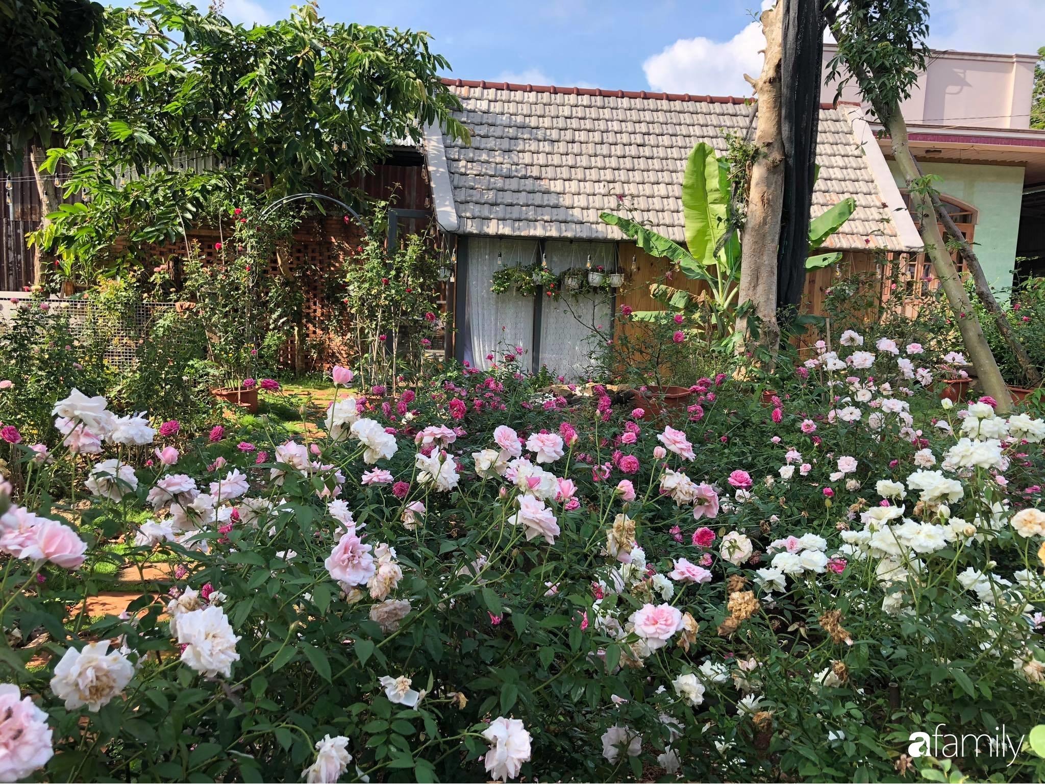 Khu vườn hoa hồng đẹp như cổ tích mà người chồng ngày đêm chăm sóc để tặng vợ con ở Vũng Tàu-3