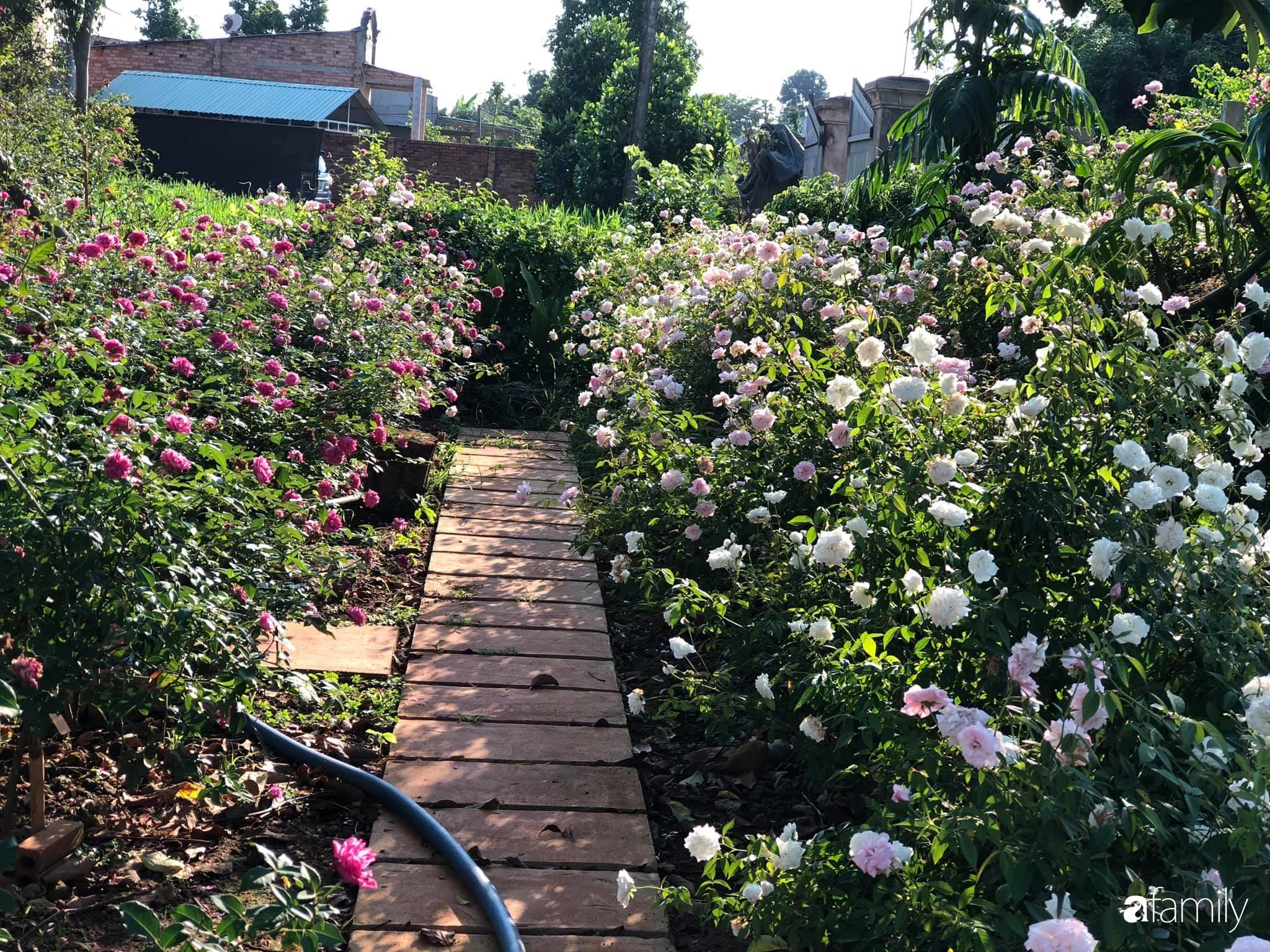 Khu vườn hoa hồng đẹp như cổ tích mà người chồng ngày đêm chăm sóc để tặng vợ con ở Vũng Tàu-4