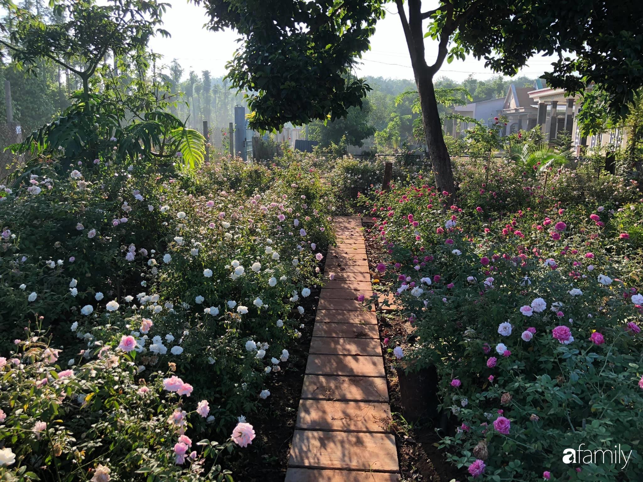 Khu vườn hoa hồng đẹp như cổ tích mà người chồng ngày đêm chăm sóc để tặng vợ con ở Vũng Tàu-1
