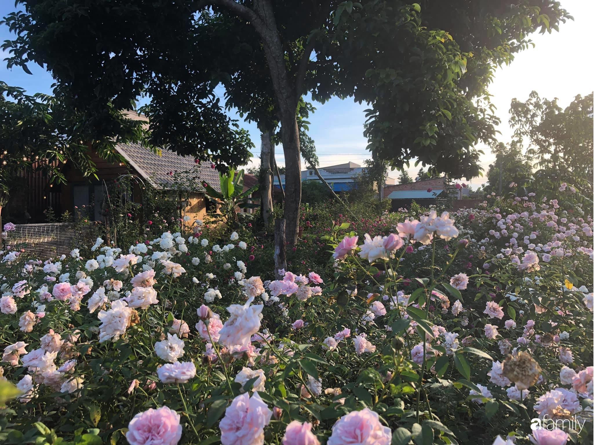 Khu vườn hoa hồng đẹp như cổ tích mà người chồng ngày đêm chăm sóc để tặng vợ con ở Vũng Tàu-13