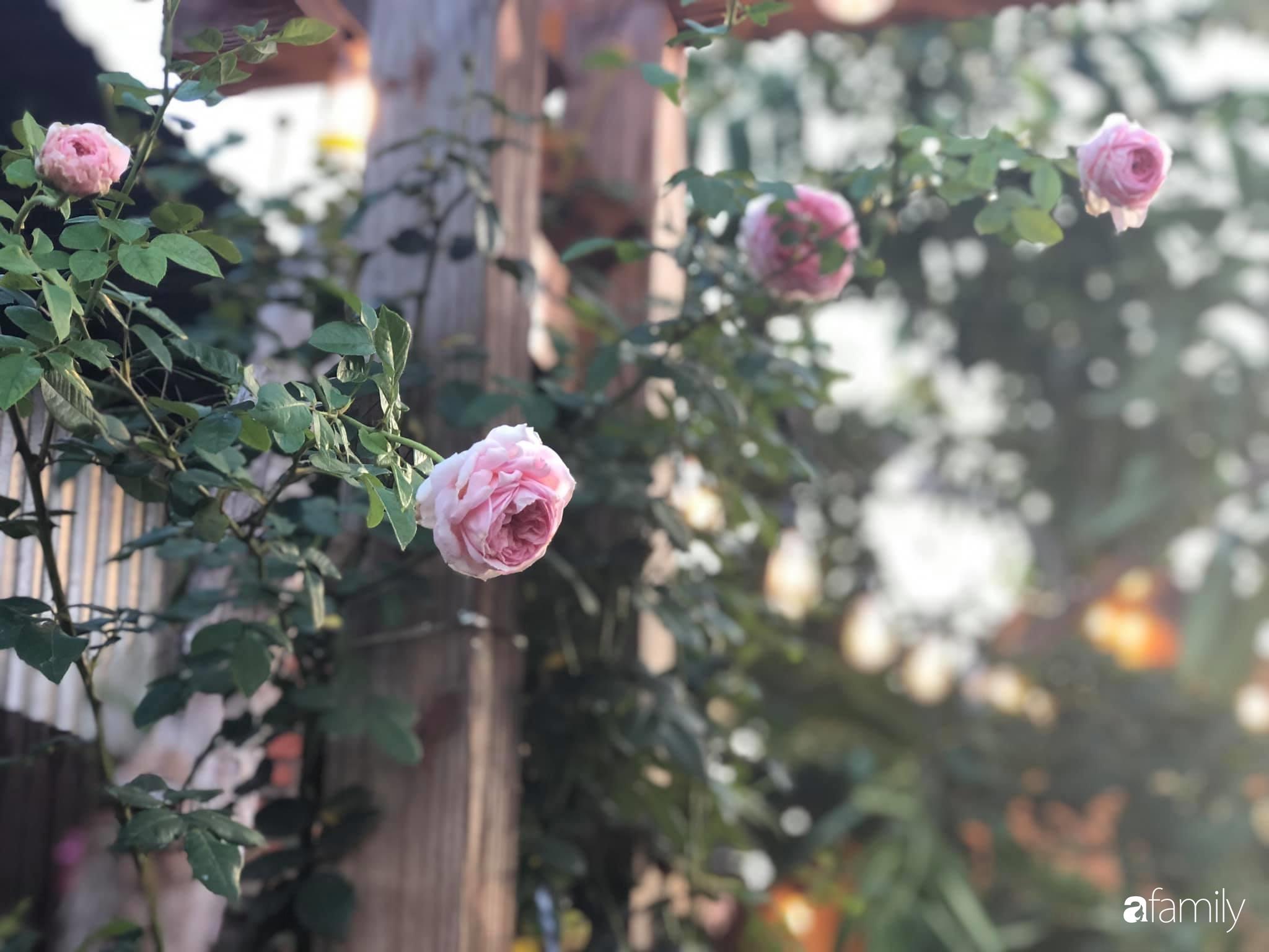 Khu vườn hoa hồng đẹp như cổ tích mà người chồng ngày đêm chăm sóc để tặng vợ con ở Vũng Tàu-15