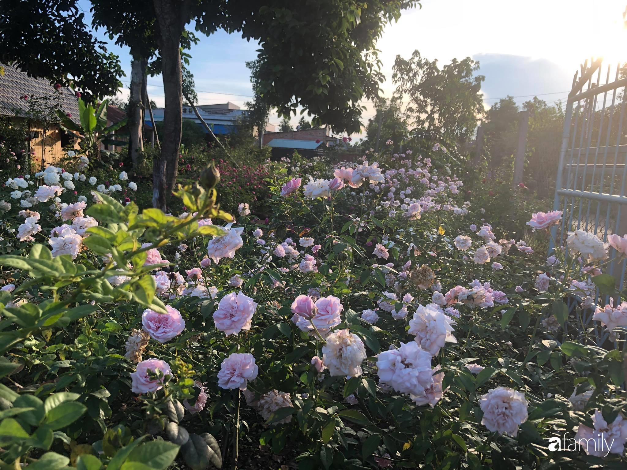 Khu vườn hoa hồng đẹp như cổ tích mà người chồng ngày đêm chăm sóc để tặng vợ con ở Vũng Tàu-27