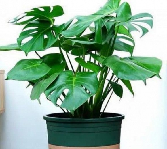 4 loại cây thích hợp cho người mới trồng, không phải bận tâm chăm sóc nhiều, tài lộc cả năm sẽ sung túc-1
