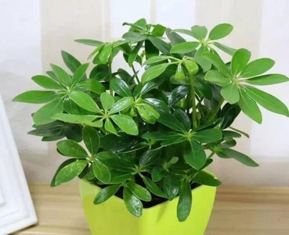 4 loại cây thích hợp cho người mới trồng, không phải bận tâm chăm sóc nhiều, tài lộc cả năm sẽ sung túc-3