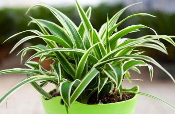4 loại cây thích hợp cho người mới trồng, không phải bận tâm chăm sóc nhiều, tài lộc cả năm sẽ sung túc-4