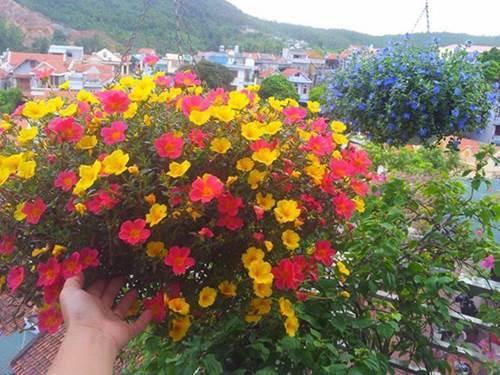 Những loại hoa thơm như nước hoa, rực rỡ xuất sắc nên trồng ở ban công-1