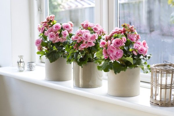 Những loại hoa thơm như nước hoa, rực rỡ xuất sắc nên trồng ở ban công-3