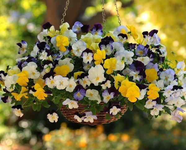 Những loại hoa thơm như nước hoa, rực rỡ xuất sắc nên trồng ở ban công-5