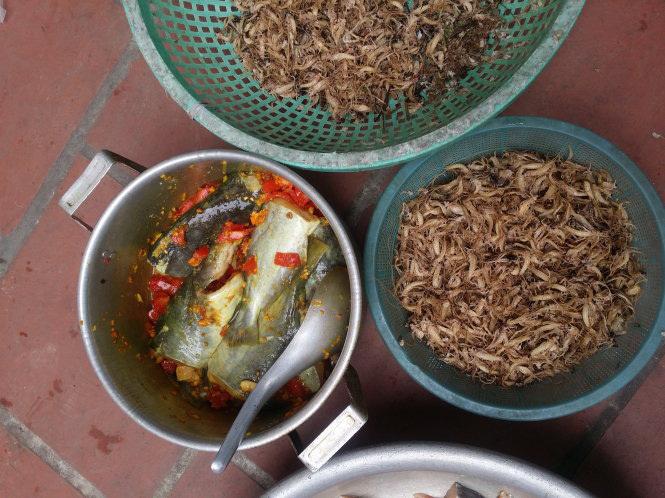 Kỳ lạ loài côn trùng chỉ sống vài tiếng trong đời nhưng khi thành món ăn thì gây nghiện-3